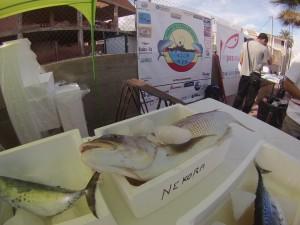 Pesca Pozo Esparto 2014